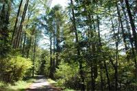 歩きたくなる道500選 ―蓼科高原・縄文遺跡と高原浴の道―